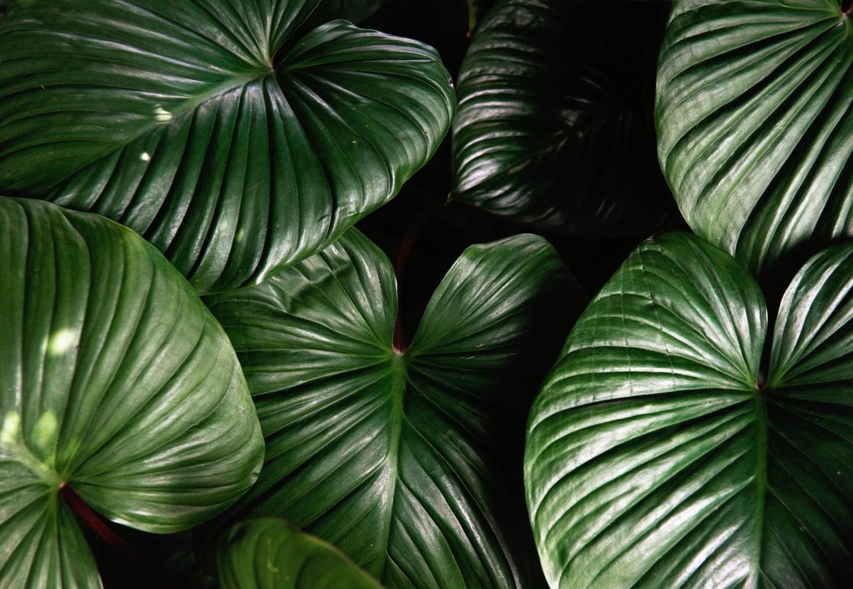 Dawid Koniuszewski Design Group_Green leaf